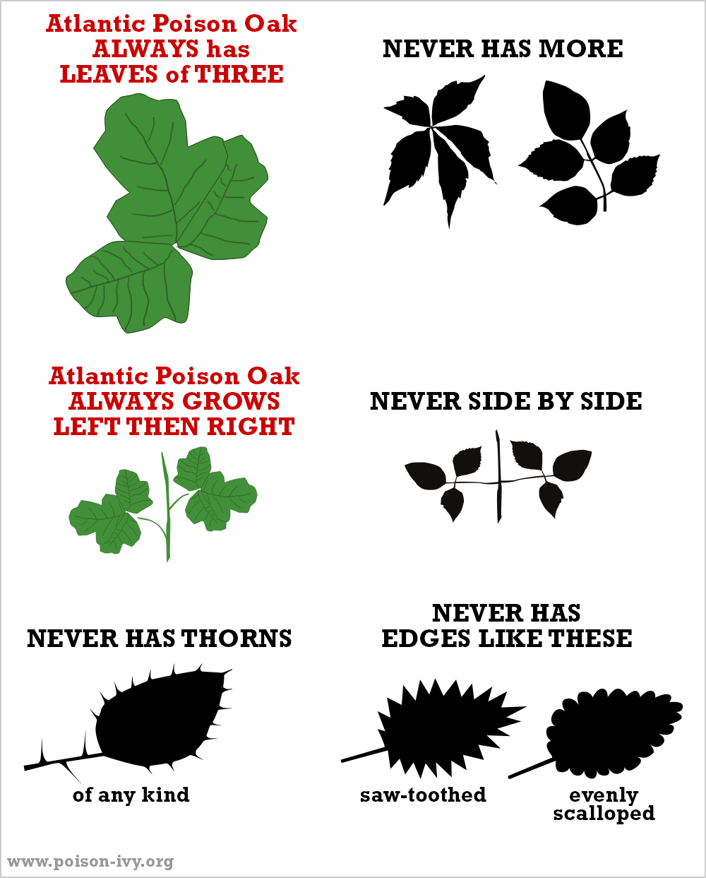 atlantic poison oak always-never chart