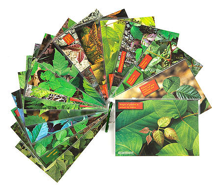 poison ivy card set