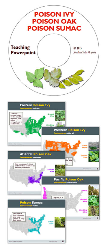 poison ivy oak sumac teaching Powerpoint