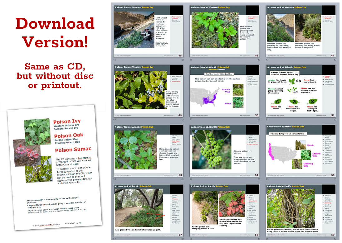 poison ivy powerpoint download