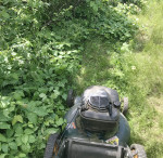 mowing poison ivy