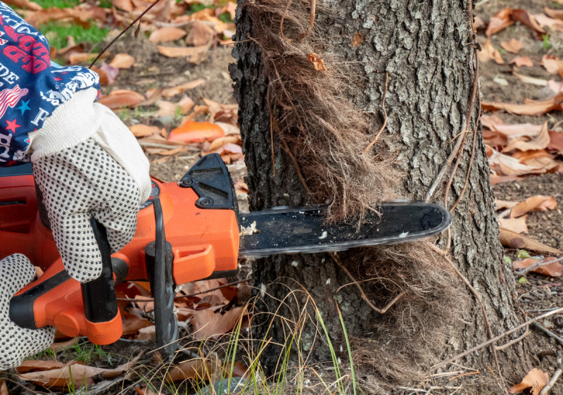 chain sawing poison ivy