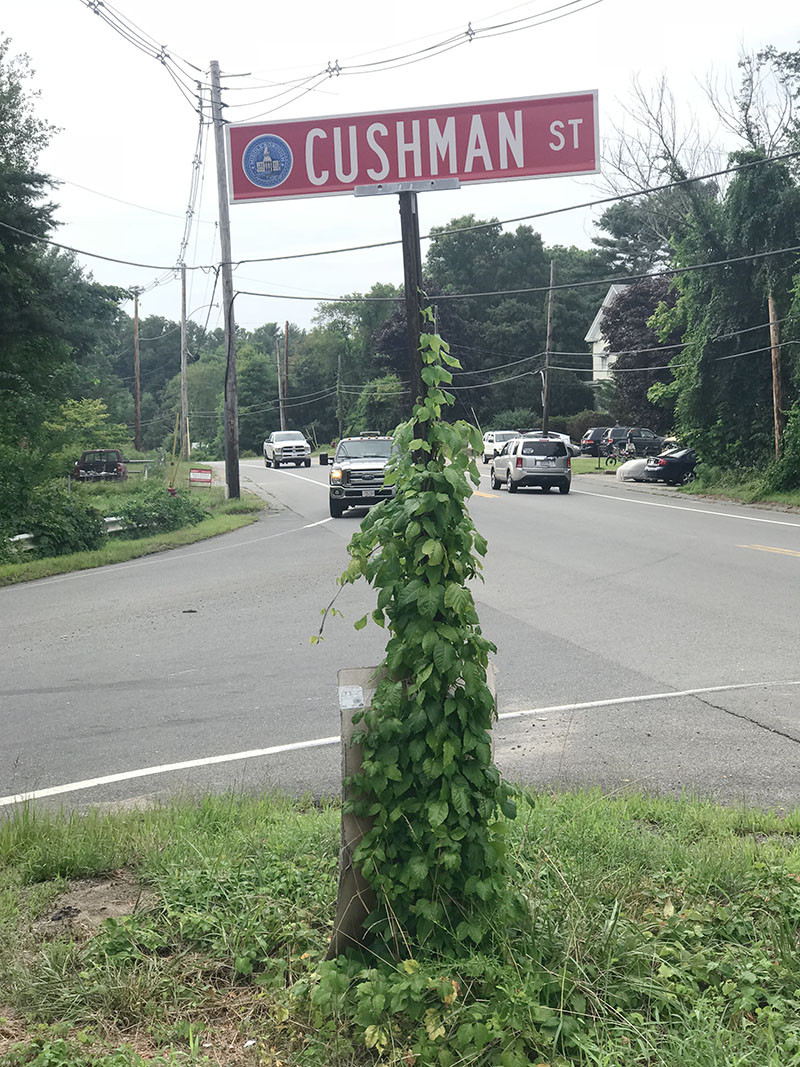 poison ivy roadsgn
