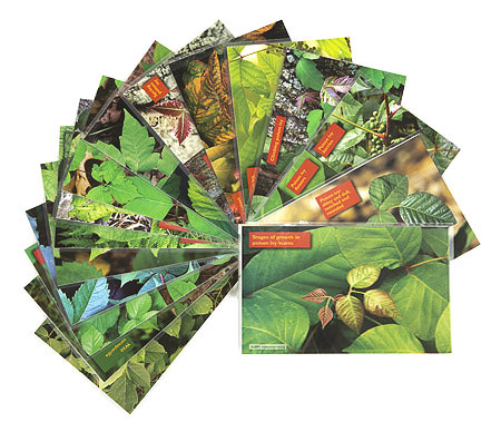 poison ivy id cards